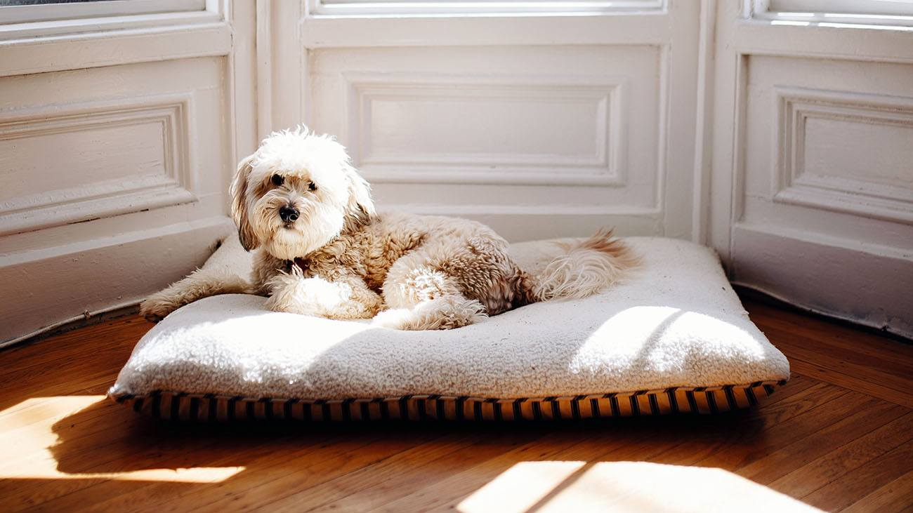 Best Dog Beds Large Dogs