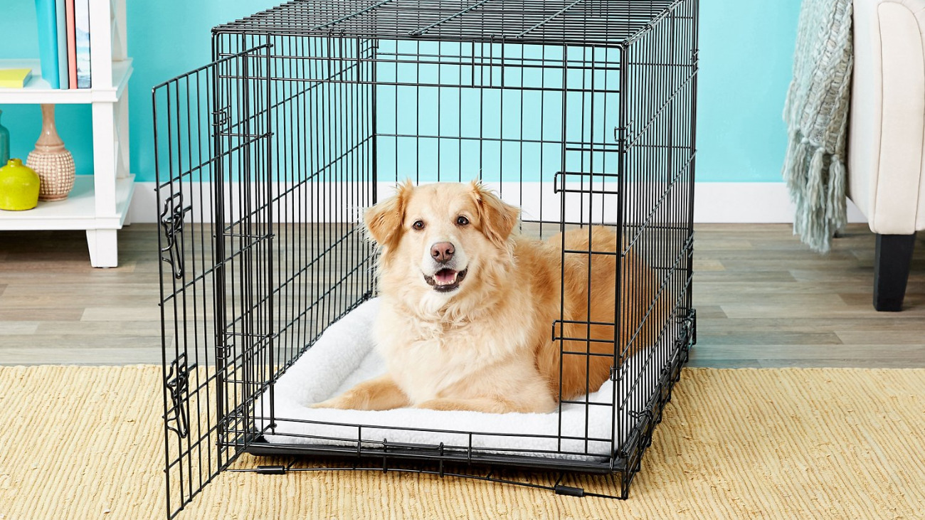 Crate Training Dog