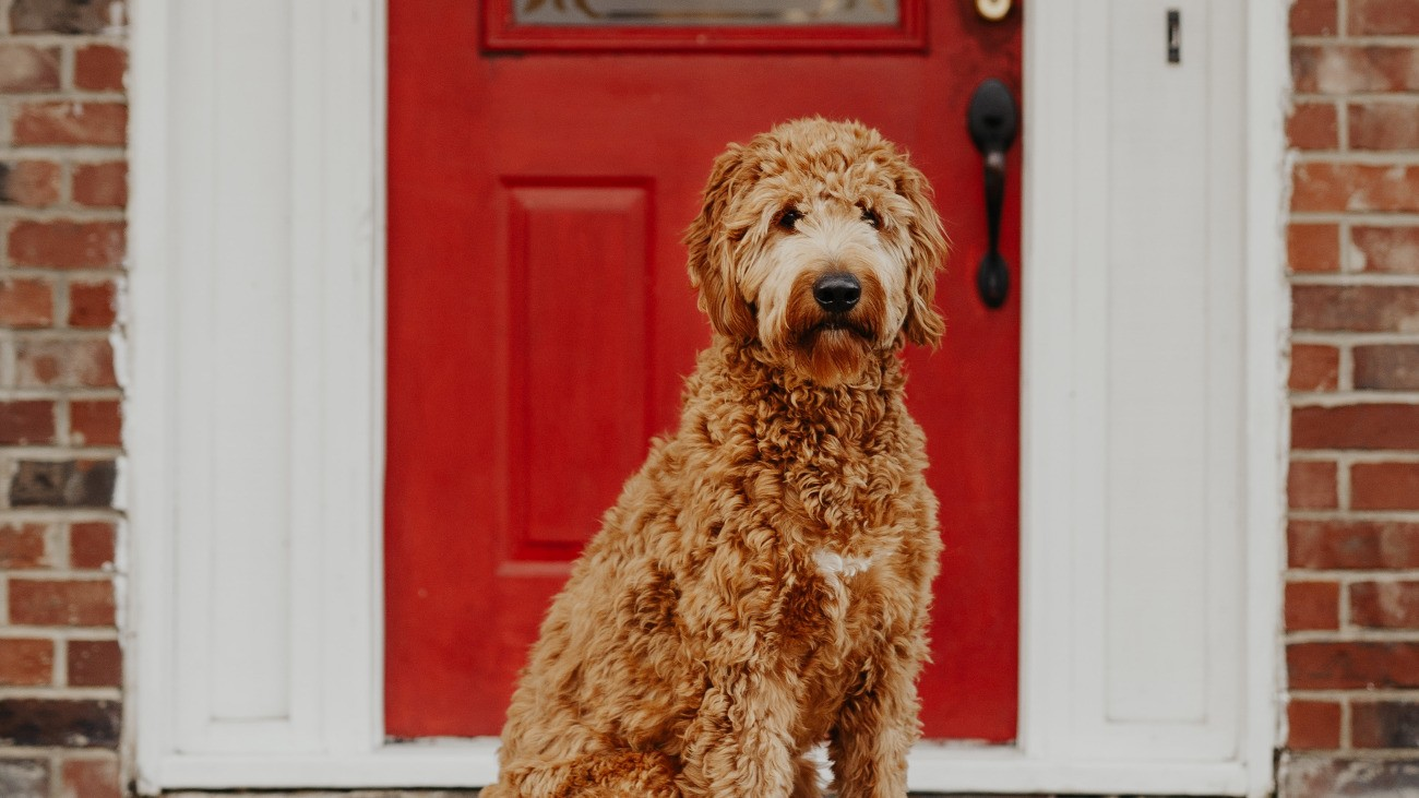 Dog Door Benefits